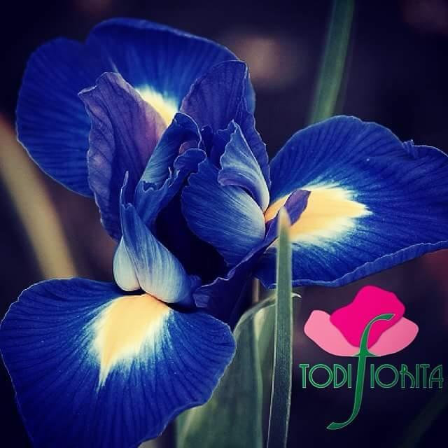 Risultati immagini per immagini di todi fiorita