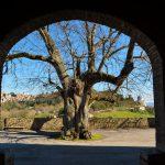 Hotel Fonte Cesia -Montesanto - Il tiglio di Montesanto - The Linden Tree of Montesanto