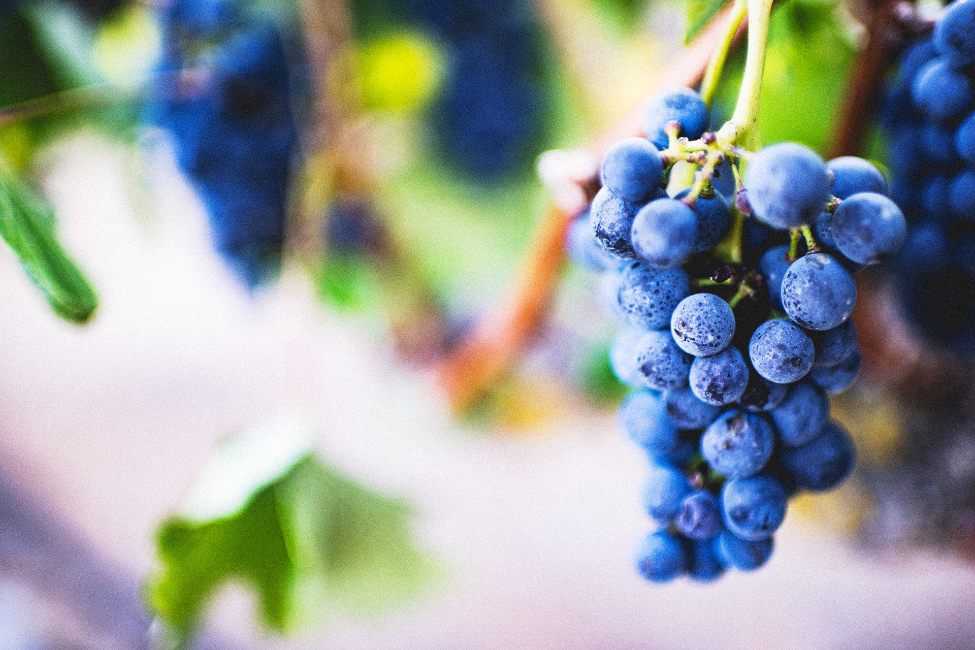 vini-todi - todi- wine- wines of Todi - umbrian wines