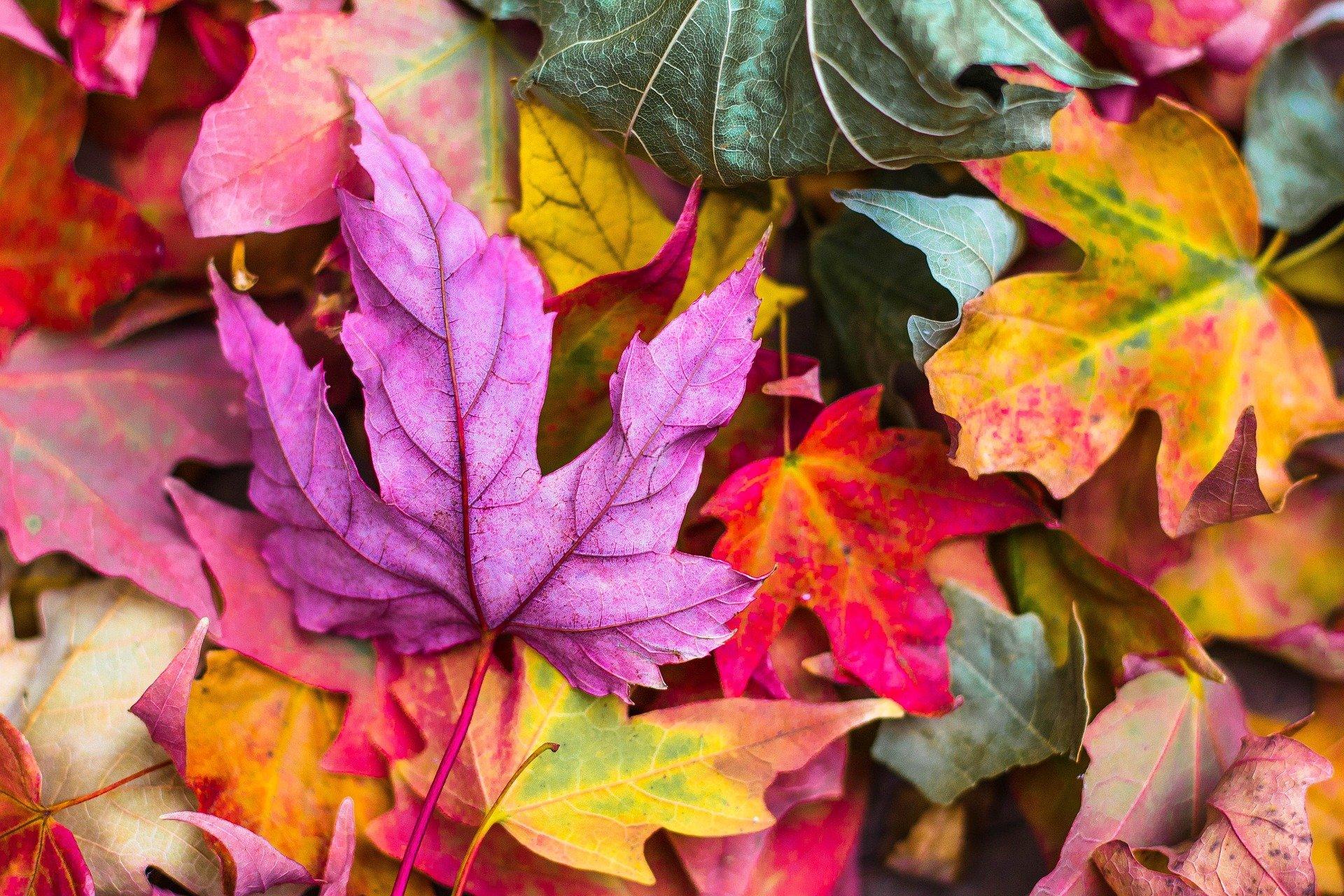 autunno - todi -umbria - autumn in Todi - Autunno a Todi -ognissanti - all saint's day